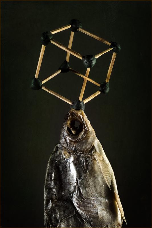 Рыбно-геометрический этюд