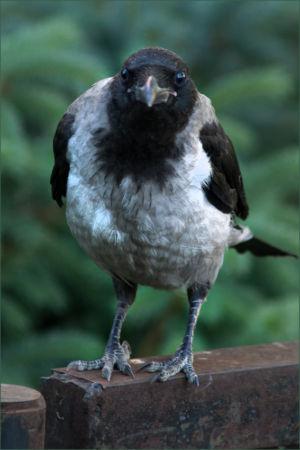 Птица умная.